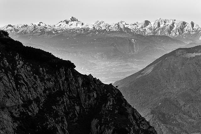 Gamsi in Julijske Alpe