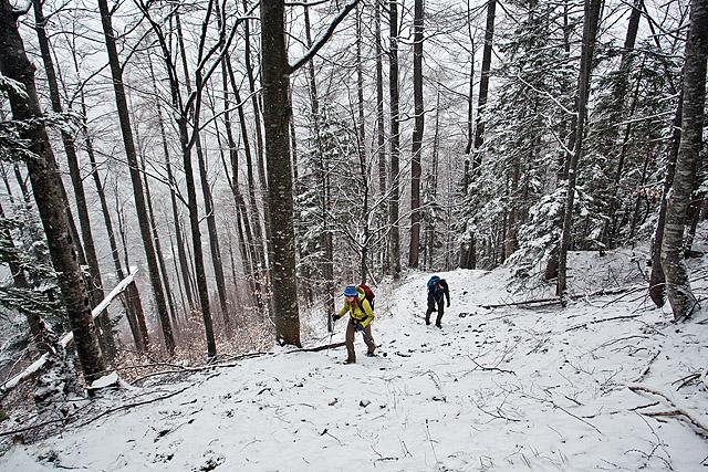 Sneg v gozdu