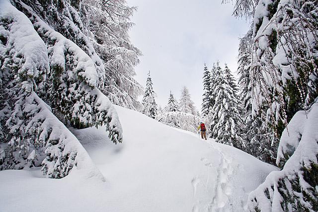 Zimska na Goli vrh