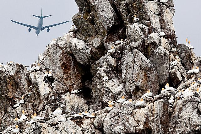 Strmoglavci in letalo