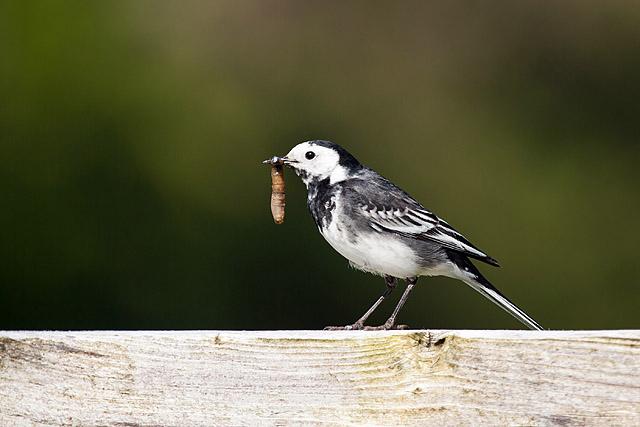 Fotografiranje ptic