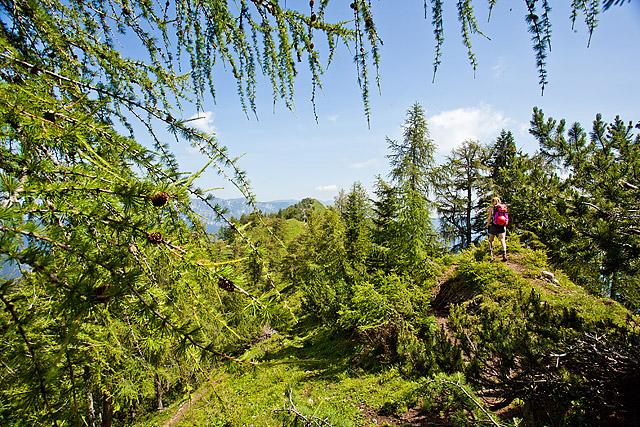 Pot na Strelovec