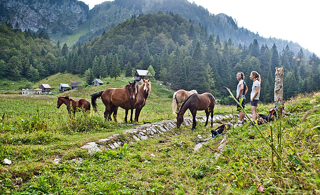 Konji na planini za Črno goro