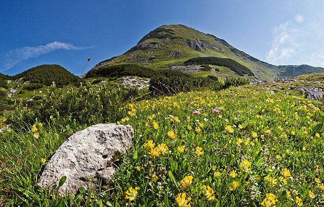 Gorsko cvetje