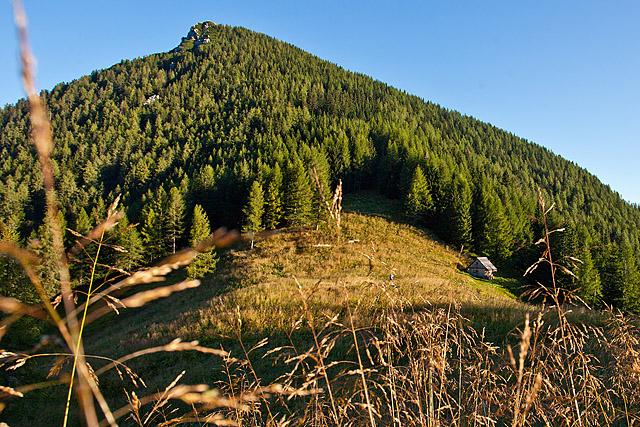 Jenkova planina Goli vrh