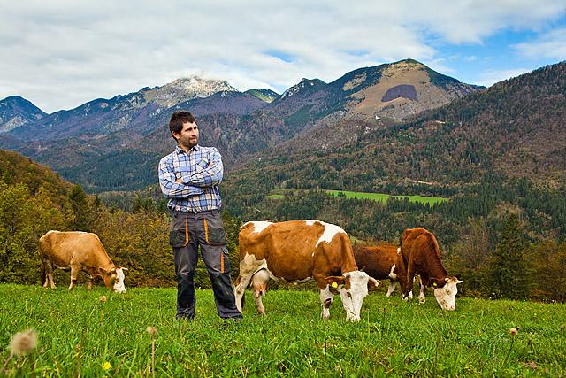 Pašnik krave
