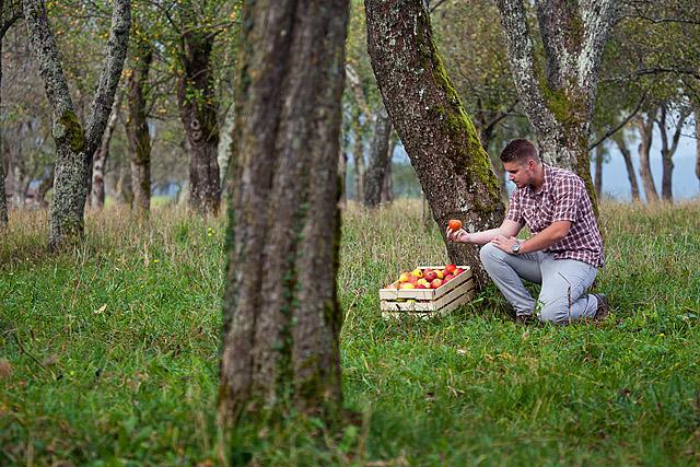Sadovnjak jabolka