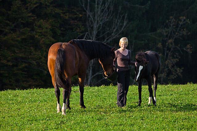 Reja konj