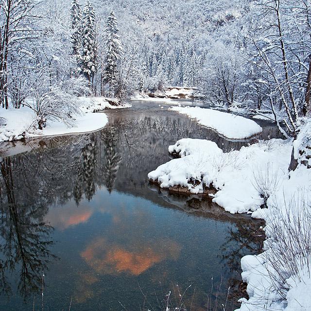 Sava bohinjka zimska