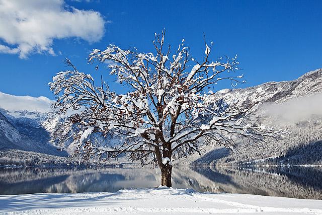 Bohinj drevo zima