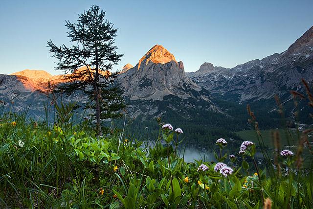 Mišelj vrh in gorsko cvetje