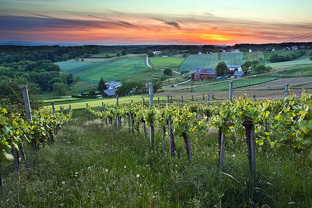 Vinogradi Suhi vrh
