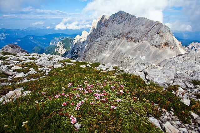 Rjavina gorsko cvetje