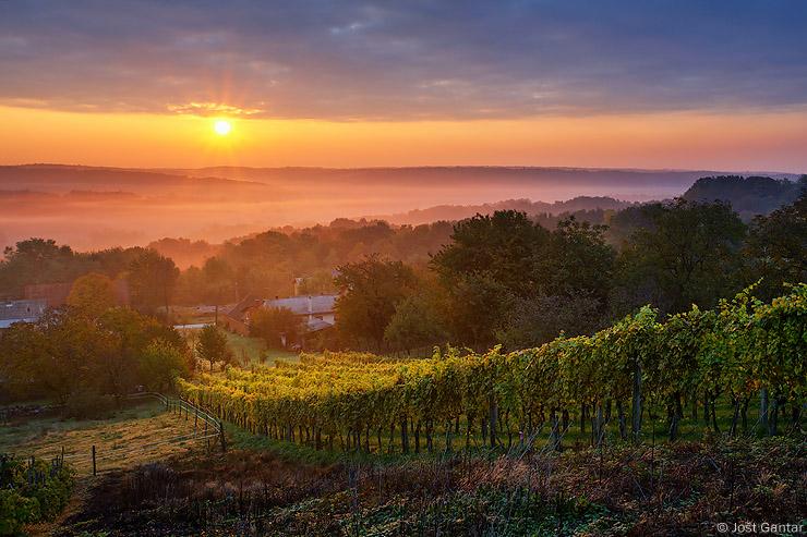 Prekmurje vinogradi