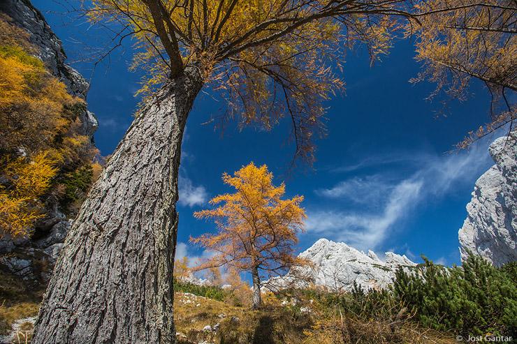 Jesen Kamniško-Savinjske Alpe