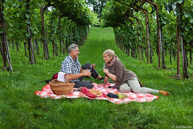 Piknik v vinogradu