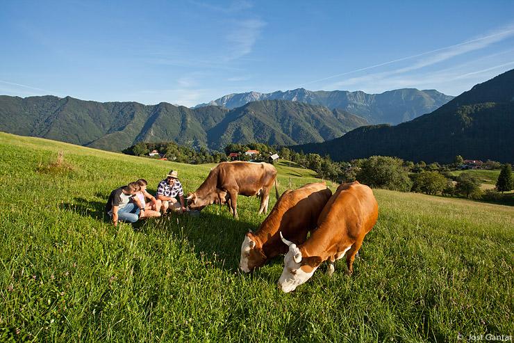 Krave na kmetiji