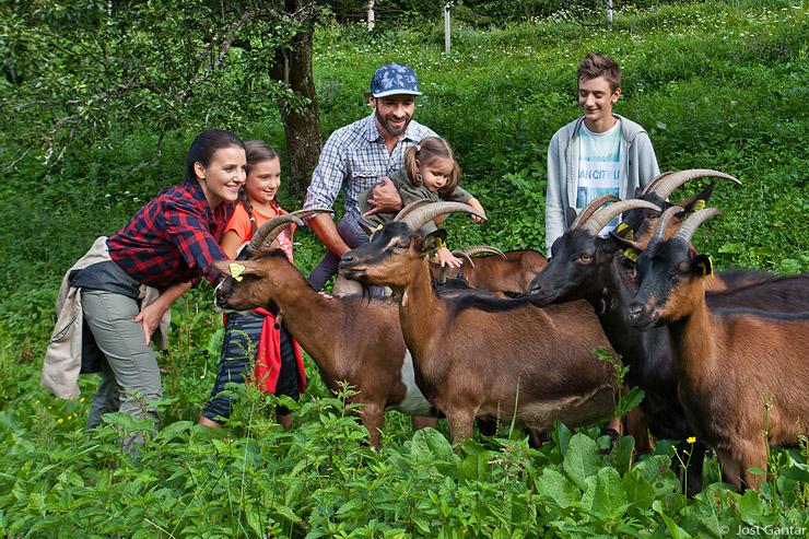 Kmetija Matk koze