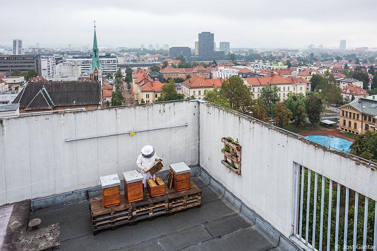 Urbani čebelar Ljubljana