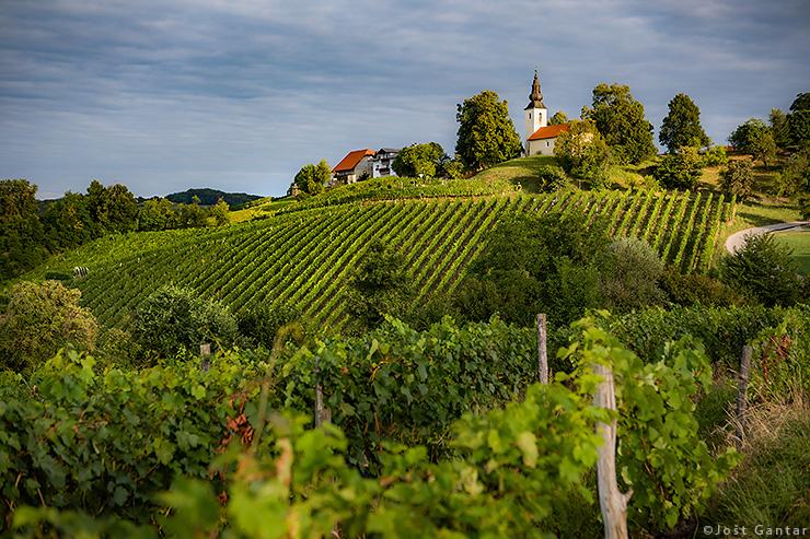 Krško vinogradi